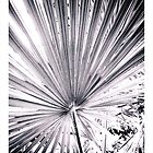 palm leaf toned by Rod Gonzalez