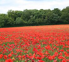 Poppy field by NKSharp
