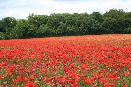 Poppy field by NKSharp