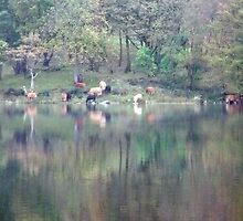 cattle reflecting on the works of monet  by SnappyMatt