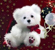 Snowdrop the Teddy Bear ! by Morag Bates