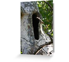 Sycamore Yawn Greeting Card