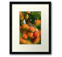 Strawberry Tree Fruits Framed Print