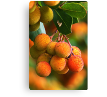 Strawberry Tree Fruits Canvas Print