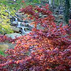 Red Tree And Waterfall by Carolyn  Fletcher