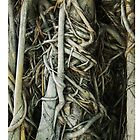 Tangled Roots by Tim McGuire