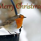Robin Christmas card by Andrew Jones