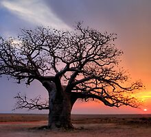Dinner Tree Sunset by Mark Ingram