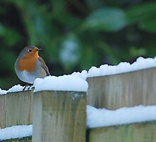 Robin in the Snow by Gillian Cross