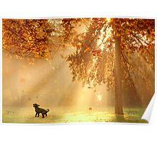 Chasing sunbeams Poster