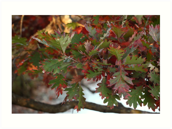 Red and Green Leaves over the Oconomowoc River by Thomas Murphy