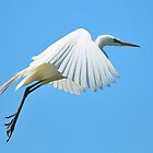 Egret by Thom  Perry