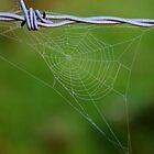 'Website'  by Stephen J  Dowdell