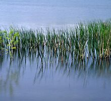 Water and Reeds by Trevor King