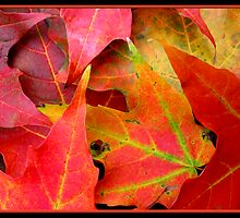 Autumn Leaves Close-up by Rose Santuci-Sofranko