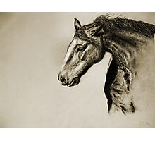 Megan's Horse Photographic Print