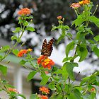 Butterfly And Flowers by Cynthia48