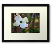 Dogwood In Spring Framed Print