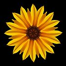 Sunflower Kaleidoscope. by Lee d'Entremont