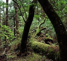 Dipsea Trail, Muir Woods National Monument by Rodney Johnson