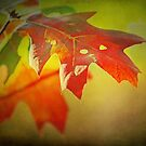 Autumn Glow by Lisa Holmgreen