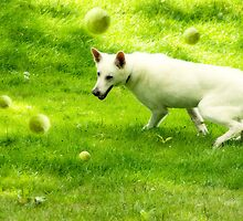 Tennis Ball Dreams by Pamela Shane