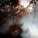 Campfire by msjilliam