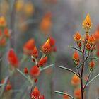 Wildflower season by Fizzgig7