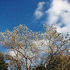 Autumn Sunshine by kathrynsgallery