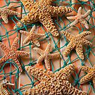Starfish in net by Garry Gay
