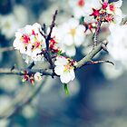 Blossoms by ╰⊰✿Sue✿⊱╮ Nueckel