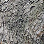 Bark by Donald Salsbury