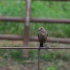 Bird on Fence by Donald Salsbury