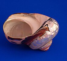 Sea Shell on Blue by Robert Gipson