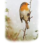 Robin in Snow Christmas Card by Nigel Tinlin
