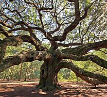The Angel Oak by Christine Annas