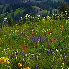 Wildflower Meadows Above Lake Irwin by CrowningGlory