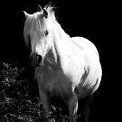 White on Black by Anthony Thomas