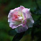 Sweet  Memories by Evita