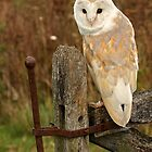 Owls of the World by Mark Hughes
