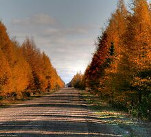 Larch Lane by Larry Trupp
