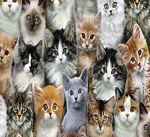 Lot's Of Cats iPhone 4s Case by purplesensation