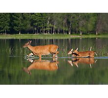 Whitetail Deer and Twin Fawns Photographic Print