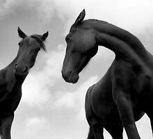 Horses (13-19) by Raymond Kerr
