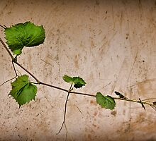 a day among the vines by scottimages