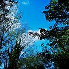 October Sky by Dan Barker