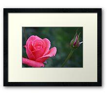 A Rose Framed Print