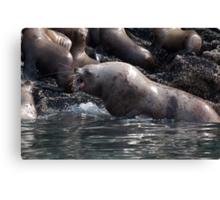 Bull Moose Sea Lion, Juneau, Alaska Canvas Print