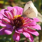 White Cabbage Butterfly by Linda  Makiej Photography