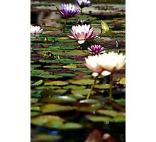 Focus on Water Lillies 2 Photographic Print